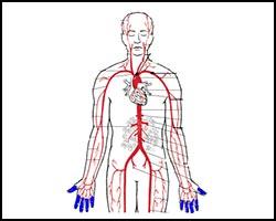Болезнь Рейно, лечение болезни Рейно, болезнь Рейно лечение, лекарства от болезни Рейно, как лечить болезнь Рейно, ангиоспазм, ангиоспазм лечение, лечение ангиоспазма, ангиоспазм реферат, как лечить ангиоспазм, болезнь Рейно реферат, нейроваскулит, нейроваскулит лечение, лечение нейроваскулита, как лечить нейроваскулит, нейроваскулит реферат, капилляроспазм, капилляроспазм лечение, лечение капилляроспазма, капилляроспазм реферат, как лечить капилляроспазм, ангиотрофоневроз, ангиотрофоневроз лечение. Киев
