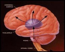 Гипотония, лечение гипотонии, гипотония лечение, гипотензия, гипотензия лечение, лечение гипотензии, лекарства от гипотонии, средства от гипотонии, лекарства от гипотензии, средства от гипотензии, гипотоническая болезнь, лечение гипотоническая болезни, гипотоническая болезнь лечение, гипотензия артериальная, гипотензия артериальная лечение, лекарства от гипотензии артериальной, артериальная гипотония, низкое давление, пониженое давление, сниженое давление, лечение низкого давления, повышение давления. Киев