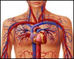 Нейро-циркуляторная дистония, вегето-сосудистая дистония, ВСД, НЦД, ВСД лечение, НЦД лечение, лечение НЦД, ВСД, НЦД, нейроциркуляторная дистония, нейроциркуляторная дистония лечение, нейро-циркуляторная дистония лечение, вегето-сосудистая дистония лечение, вегето-сосудистая дистония лечение пчелами, вегето-сосудистая дистония лечение травами, вегето-сосудистая дистония лечение иглами, кардионевроз, кардионевроз лечение, вегетоневроз, вегетоневроз лечение, дистония лечение. Киев