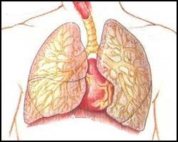 Силикогеноз, лечение силикогеноза, силикогеноз лечение, лекарства от силикогеноза, средства от силикогеноза, проффесиональное заболевание, заболевание горняков, силикозное поражение легких, силикогеноз лечение лазером, силикогеноз лечение травами, силикогеноз лечение пчелами, силикогеноз лечение апитерапией, силикогеноз лечение физиотерапией, силикогеноз лечение иглами, силикогеноз лечение аромамаслами, как лечить силикогеноз, силикогеноз лечить быстро, силикогеноз болезнь, силикогеноз фото. Киев